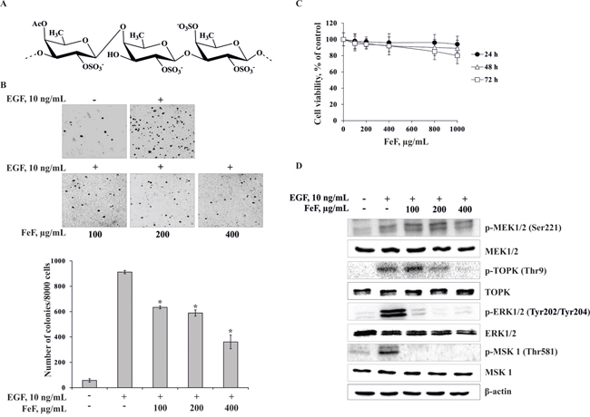 The effect of FeF on EGF-induced neoplastic transformation and molecular mechanism in JB6 Cl41 cells.