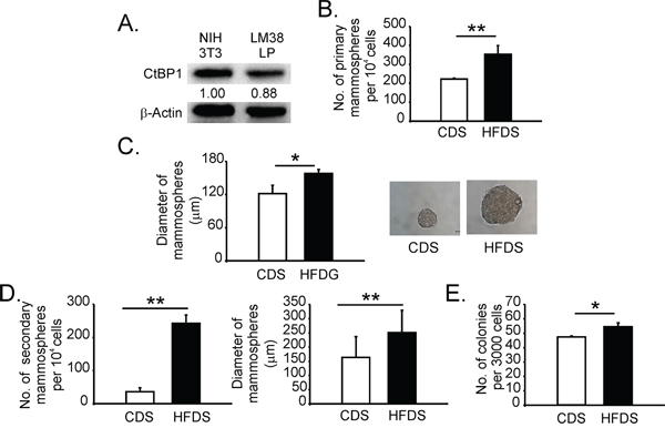 Serum from mice with MeS increased the stem-like/progenitor cell population in breast cancer cells.