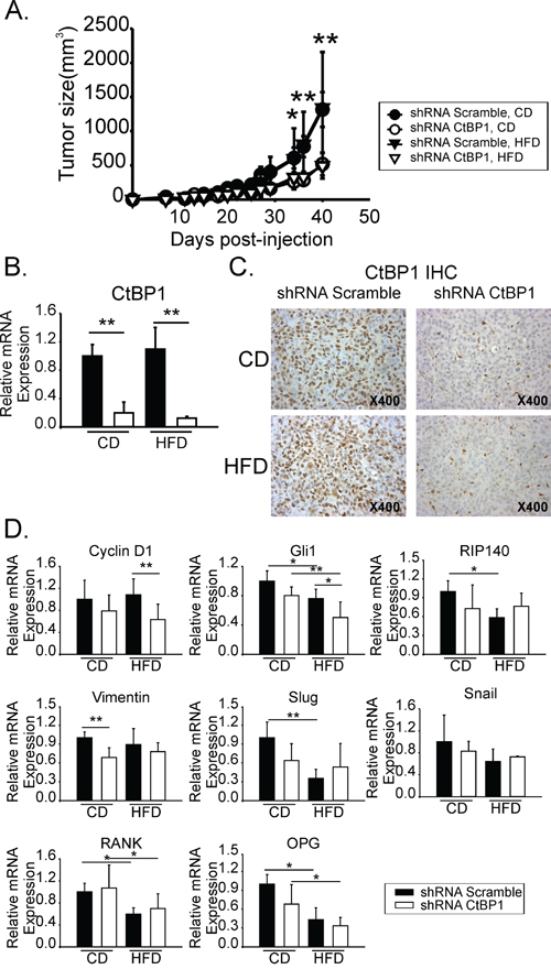 CtBP1 increased breast tumor growth in mice with MeS.