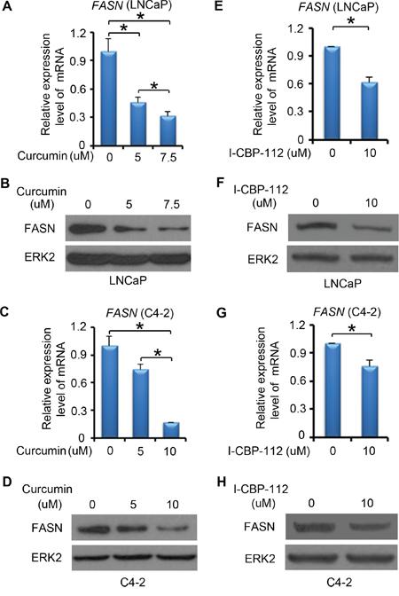 P300 inhibitors affect FASN expression.