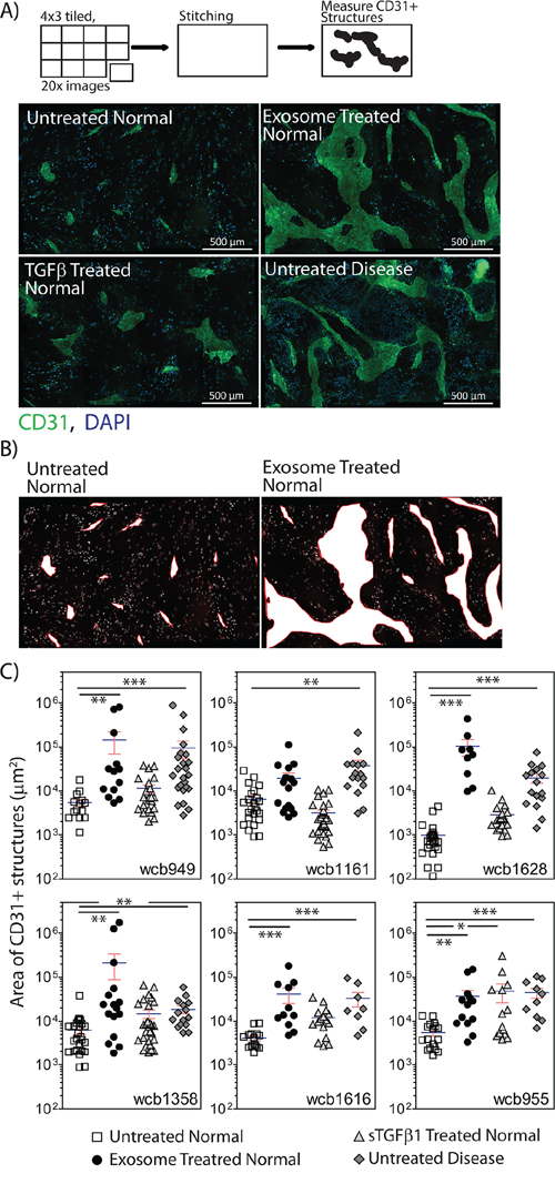 Stromal cells show differential angiogenesis supporting function.