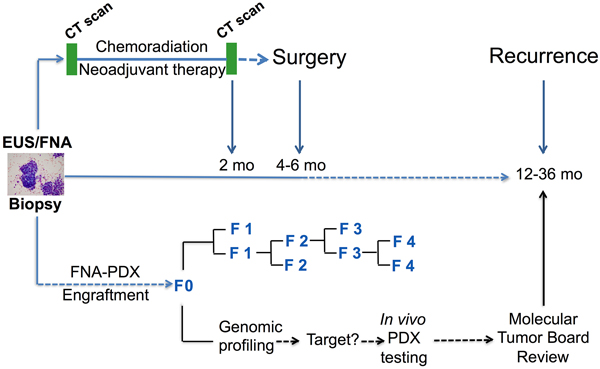 Clinical pathway for establishing FNA-PDX models at time of diagnosis of pancreatic ductal adenocarcinoma.