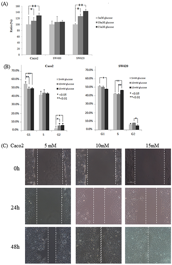 Colon cancer cell lines Caco2, SW480, and SW620 incubated in varying glucose conditions affects cell cycle, proliferation, and migration.