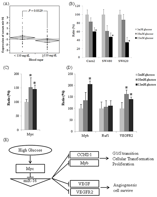 The expressions of miR-16 are downregulated in high glucose conditions in vivo and in vitro and the expression of miR-16 related mRNAs.