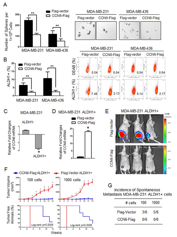 CCN6 overexpression reduces TICs in aggressive breast cancer cells and their tumorigenic ability