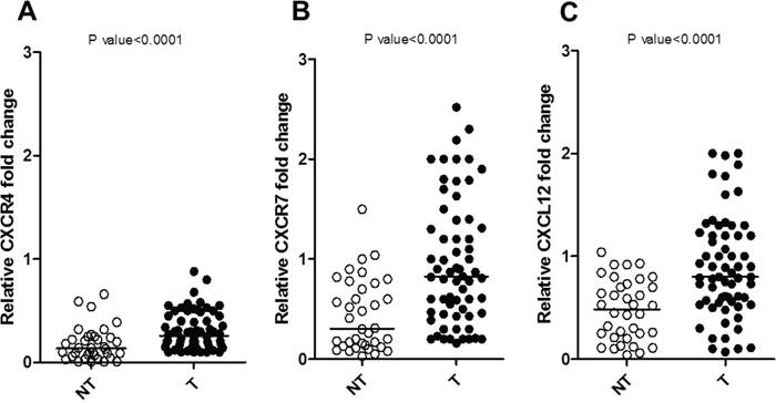 Relative mRNA expression of NETs (T) versus normal tissue (NT) by real-time RT-PCR.