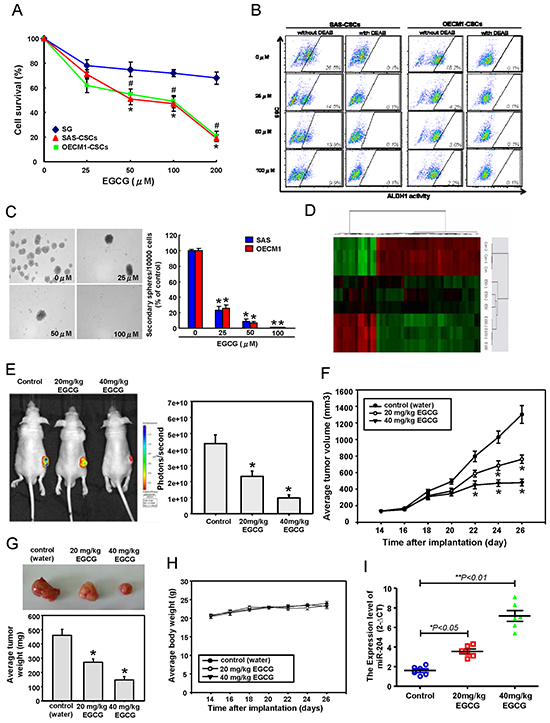 Anti-CSCs effects of EGCG in OSCC through miR-204 induction.