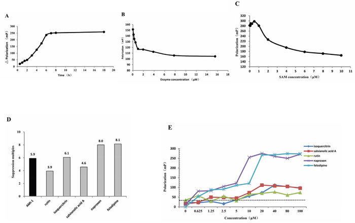 Screening of PRMT1 inhibitors.