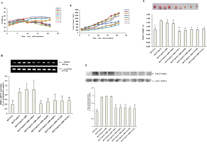 PRMT1 inhibitors enhanced the antitumor effect of adriamycin in nude mice bearing resistant breast cancer.