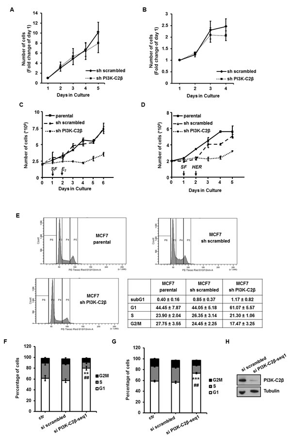 PI3K-C2β regulates breast cancer cell proliferation and cell cycle progression.