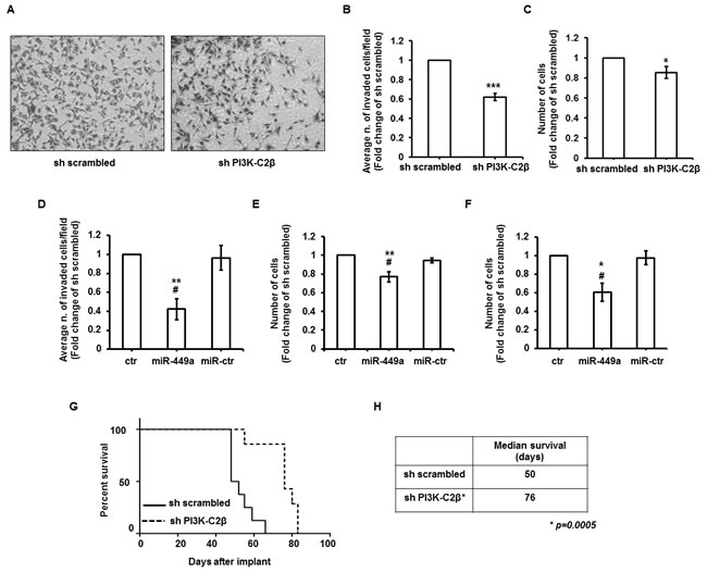 PI3K-C2β regulates cell invasion and metastasis formation.