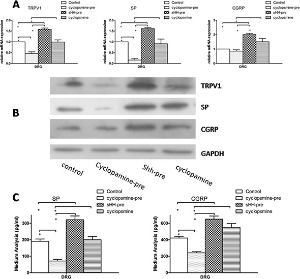 Effect of sHH and cyclopamine on expression and secretion of TRPV1, SP and CGRP in DRG in co-culture system.