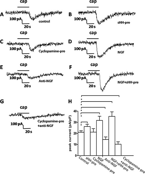 The sHH signaling pathway and NGF potentiated TRPV1 currents in DRG in co-culture system.