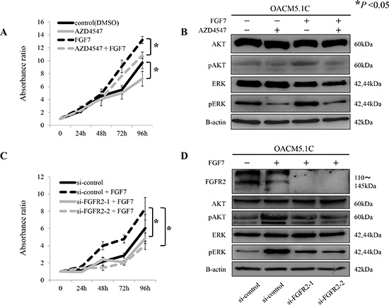 Proliferative inhibition of tumor cells by the pan-FGFR inhibitor AZD4547, and by siRNAs targeting FGFR2, through de-phosphorylation of AKT and ERK.