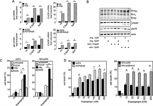 Inhibition of mitochondrial OXPHOS increases UPR signaling pathways and apoptotic cell death induced by vemurafenib.