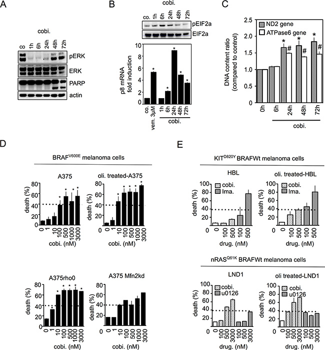 Mitochondrial OXPHOS limits cell death induced by MEK inhibitors in melanoma with constitutive MAPK activation.