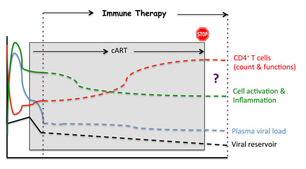 Potential impacts of an immunotherapeutic strategy.