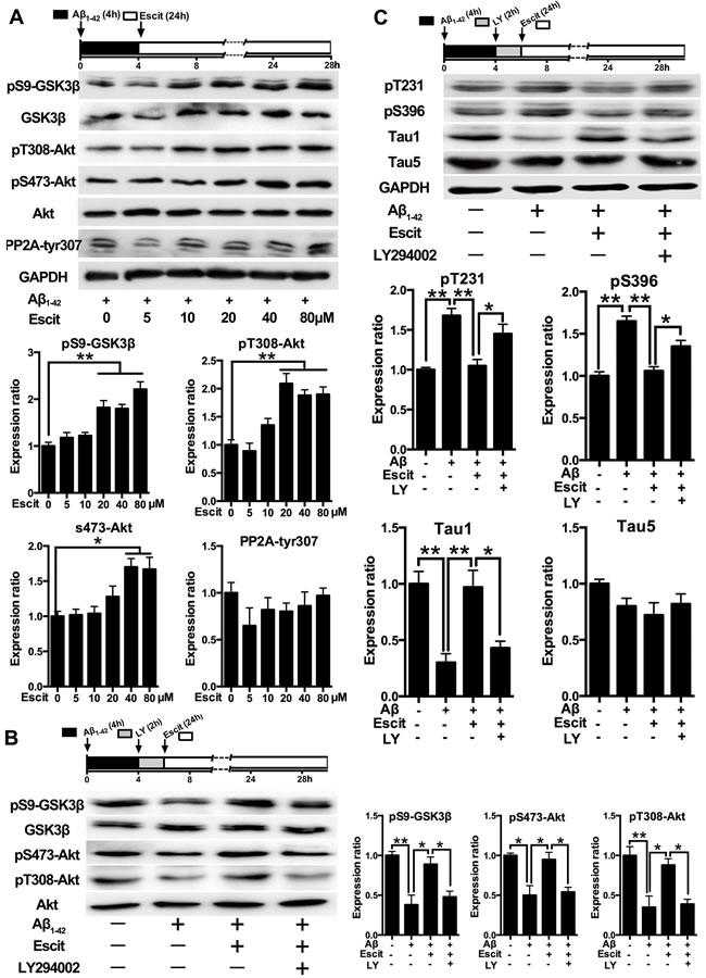Activation of PI3K/Akt/GSK-3β pathway contributes to the anti-hyperphosphorylation role of escitalopram.