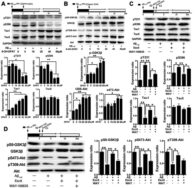 Effects of escitalopram on the PI3K/Akt/GSK-3β signaling pathway depends on 5-HT