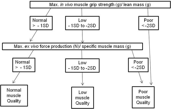 Modified algorithm to define muscle quality index in mice based on Barbat-Artigas