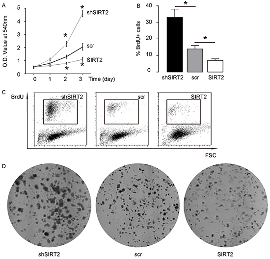 SIRT2 suppression increases NSCLC cell growth.
