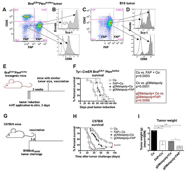 Vaccination with the AdC68-mFAP vector improves survival of tumor-bearing mice.