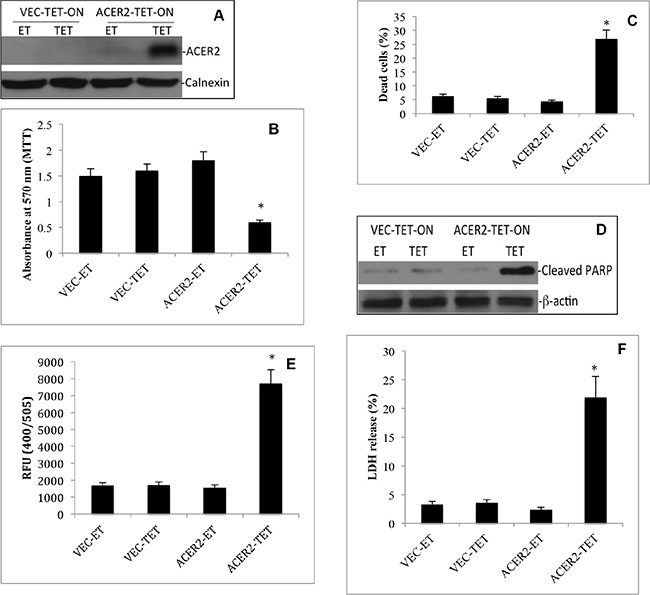 High but not low ectopic expression of ACER2 induces programmed cell death in T-REx™-HeLa cells.