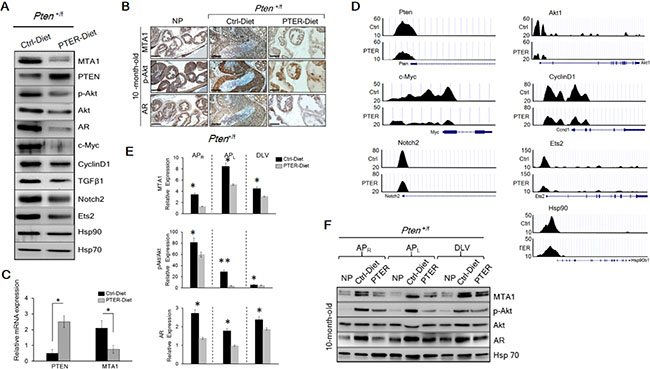 Inhibition of MTA1 and its associated signaling by pterostilbene (PTER) in Pten+/f mice.