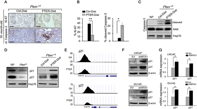 Pterostilbene significantly inhibits MTA1-dependent cell proliferation and induces MTA1-targeted apoptosis in Pten+/f mice.