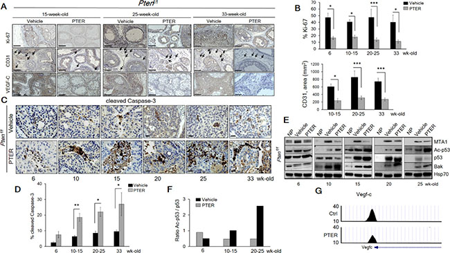 Pterostilbene significantly inhibits MTA1-dependent cell proliferation and angiogenesis and induces MTA1-targeted apoptosis in Ptenf/f mice.