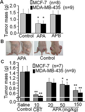 Suppressive effects of APA on tumor growthin a xenograft breast cancer mouse model.