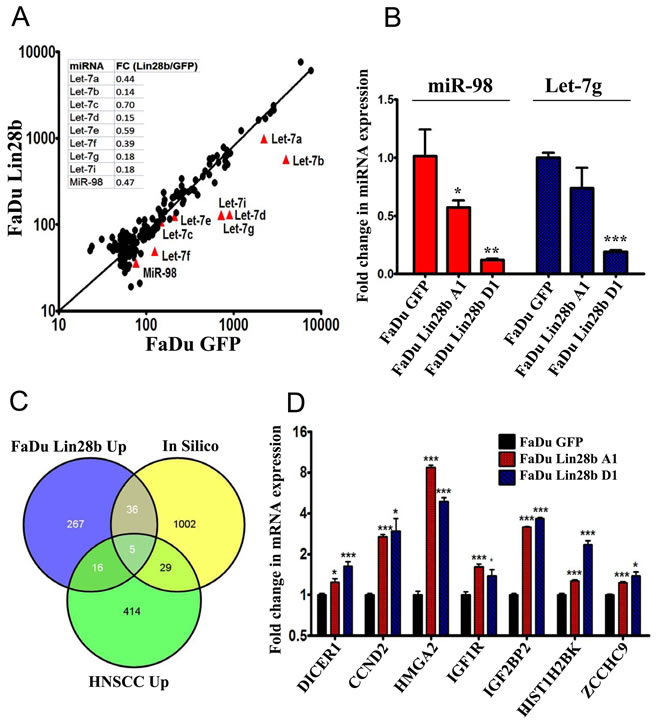 Characterizing the miRNA and mRNA changes in FaDu~Lin28b cells.