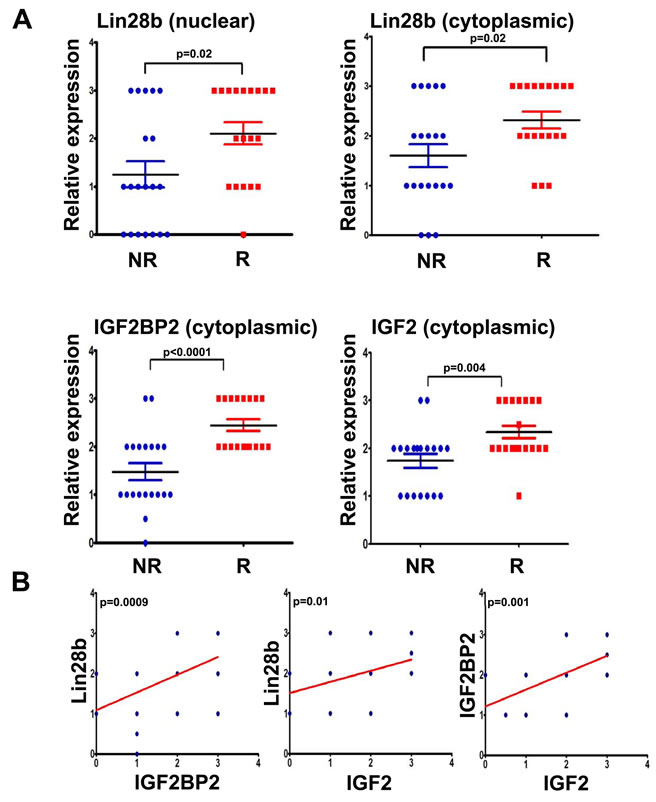 Expression of Lin28b, IGF2BP2, and IGF2 was associated with higher risk of recurrence in primary HNSCC samples.