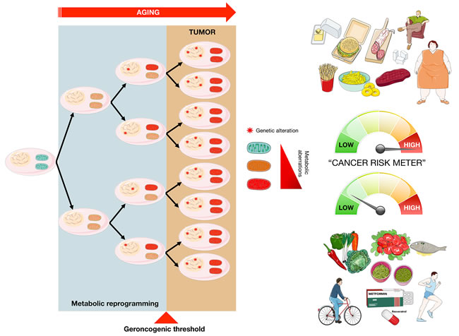 "The ""geroncogenic"" hypothesis of carcinogenesis."