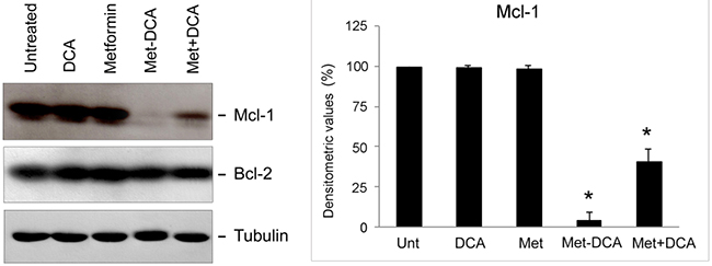 Mcl-1 down-regulation in p53 wild-type leukemic cells upon treatment with Metformin plus DCA combination and with the Met-DCA cocrystal MetH2++•2DCA−.