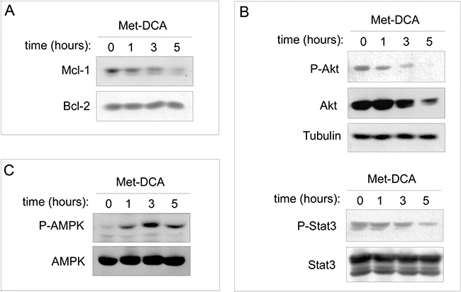 Effects of the Met-DCA cocrystal MetH2++•2DCA− on different molecular signaling pathways.