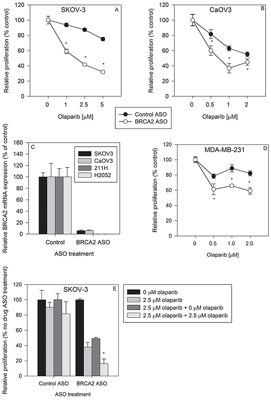 BRCA2 inhibition sensitizes ovarian cancer and breast cancer cell lines to olaparib treatment.