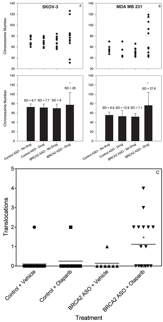 Combined BRCA2 ASO and olaparib treatment increases the variability in chromosome number and increases translocation frequency in ovarian and breast cancer cells.