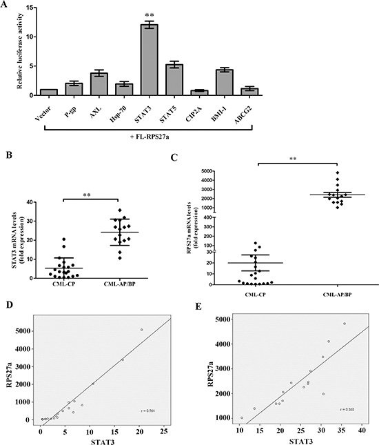 Relationship of STAT3 and RPS27a and their expression in CML patients.