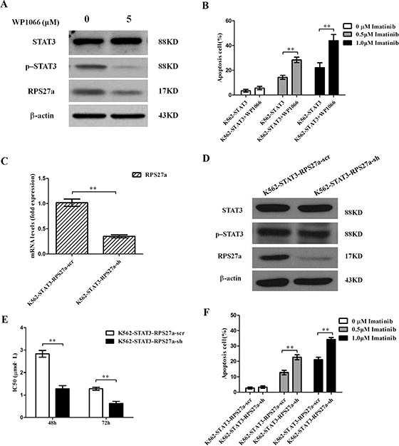 Validation of p-STAT3/RPS27a pathway blocking and its effect on apoptosis in K562-STAT3 cells.