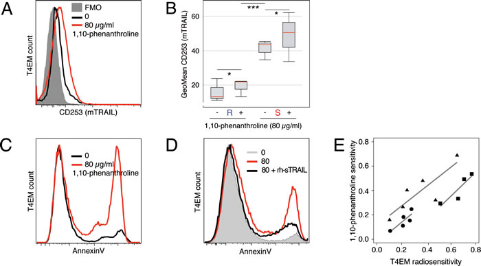 1,10-Phenanthroline increases mTRAIL expression level and induces T4EM lymphocytes apoptosis.