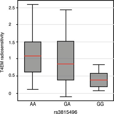 T4EM lymphocyte radiosensitivity monitored by rs3815496 genotype.