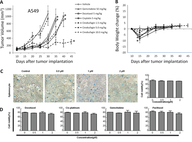 The effects of CB on in vivo tumor growth in human NSCLC cell lines and in vitro cell growth in rat splenocytes.