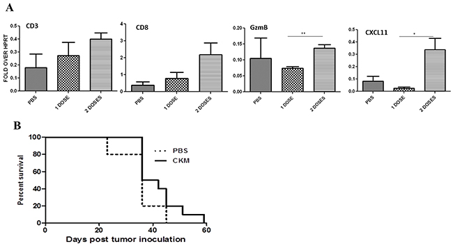 Two doses of CKM enhanced CD3 CD8+ markers and CXCL11, but not granzyme B levels in the tumor tissue, and did not enhance the survival of MC38-luc tumor-bearing C57BL/6 mice.