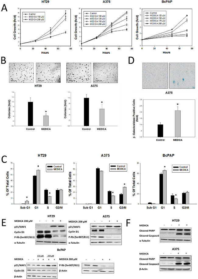 Growth Inhibition and apoptosis of B-Raf(V600E) cell types by MEDICA.