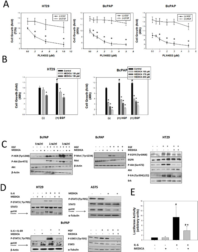Suppression of PLX4032-resistant B-Raf(V600E) cell types by MEDICA.