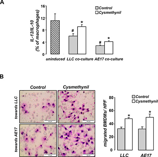 Cysmethynil inhibits tumor-driven M2 polarization (A) and migration (B) of macrophages in vitro.