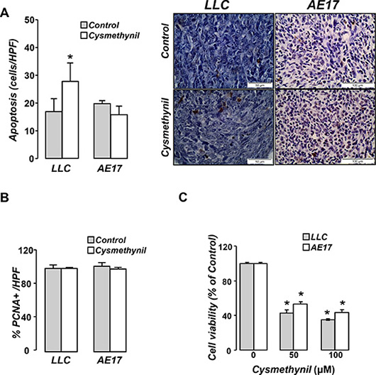 Cysmethynil induces tumor cell apoptosis in vivo and reduces tumor cell viability in vitro.