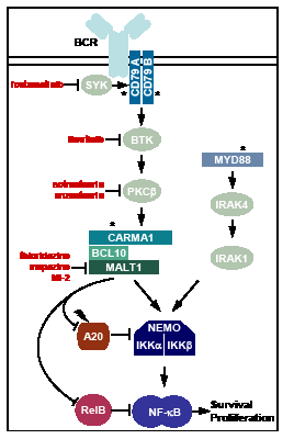 Oncogenic mechanisms and target directed therapeutic approaches in ABC-DLBCL.