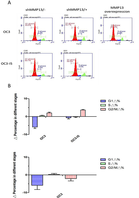 Downregulation in the G1 phase was induced by shMMP-13 transfection in oral cancer cells.
